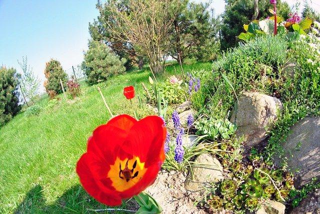 kytičky na zahradě