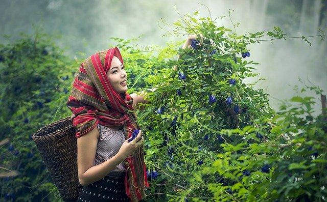 kambodžská dívka